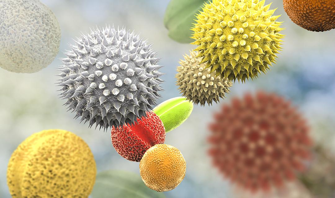 Qu est ce que le pollen